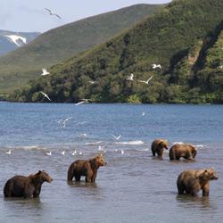 Le Kamtchatka